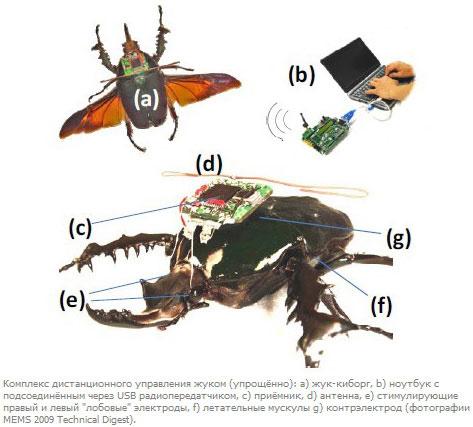 Комплекс дистанционного управления жуком