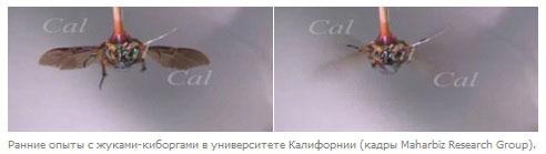 Опыты с жуками-киборгами