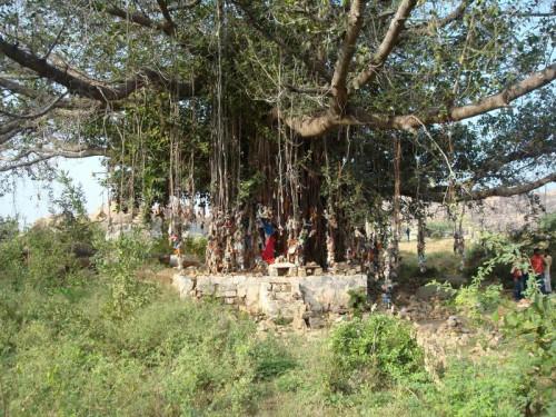 Индия.Путтапарти.Кальпаврикша – Дерево Желаний.